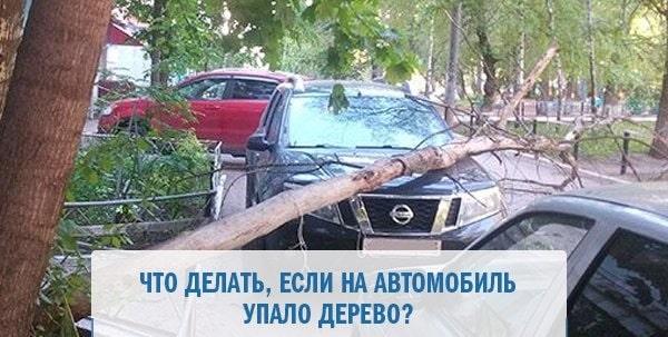 Как действовать, если на автомобиль упало дерево и кто должен возместить убытки
